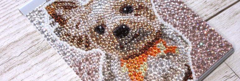 犬写真デコヨークシャテリアヨーキー